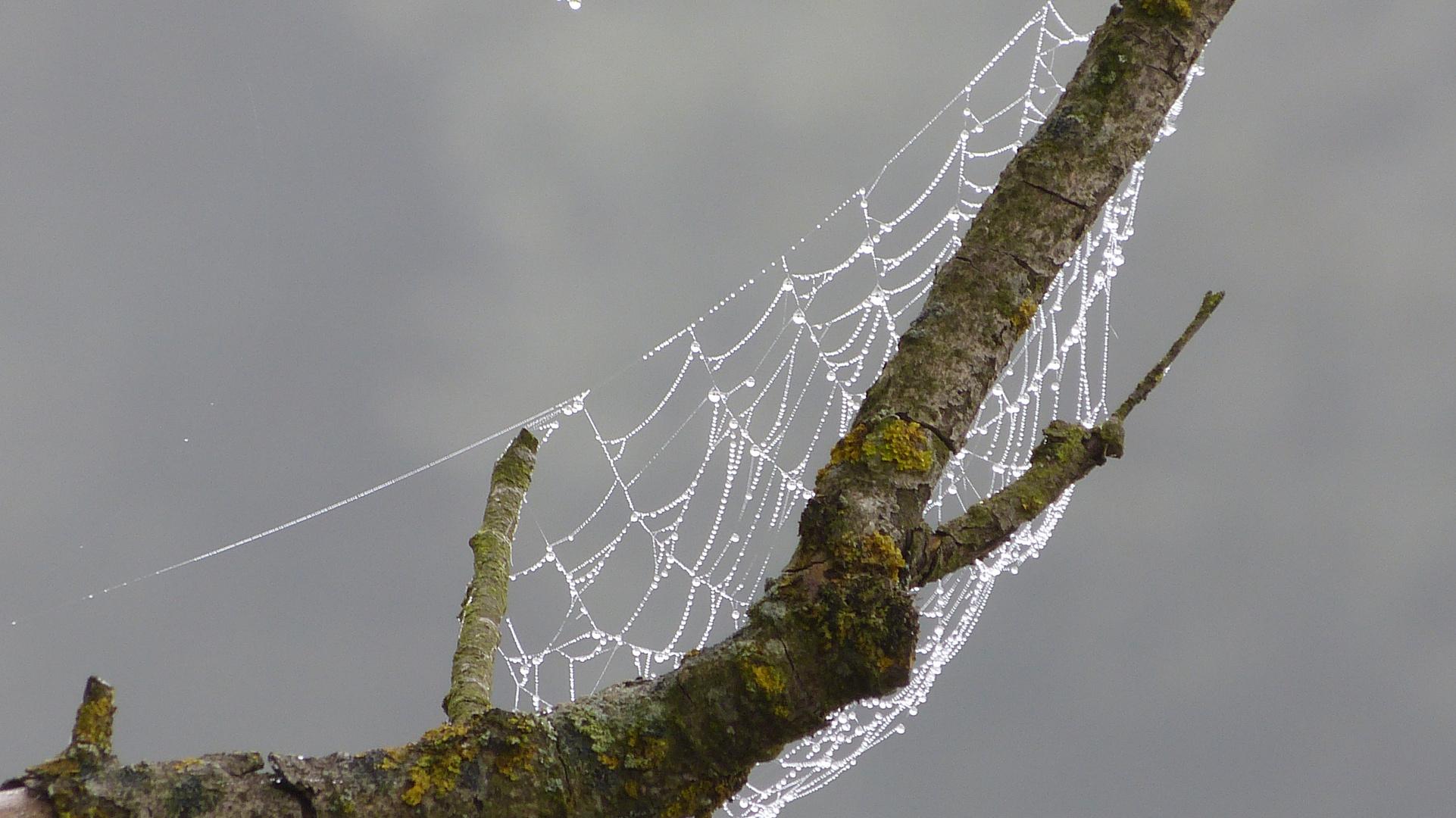 Spinnennetz 3