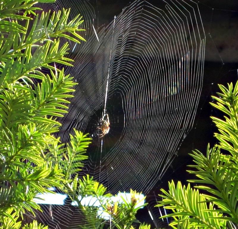 spinnennetz foto  bild  tiere wildlife spinnen bilder