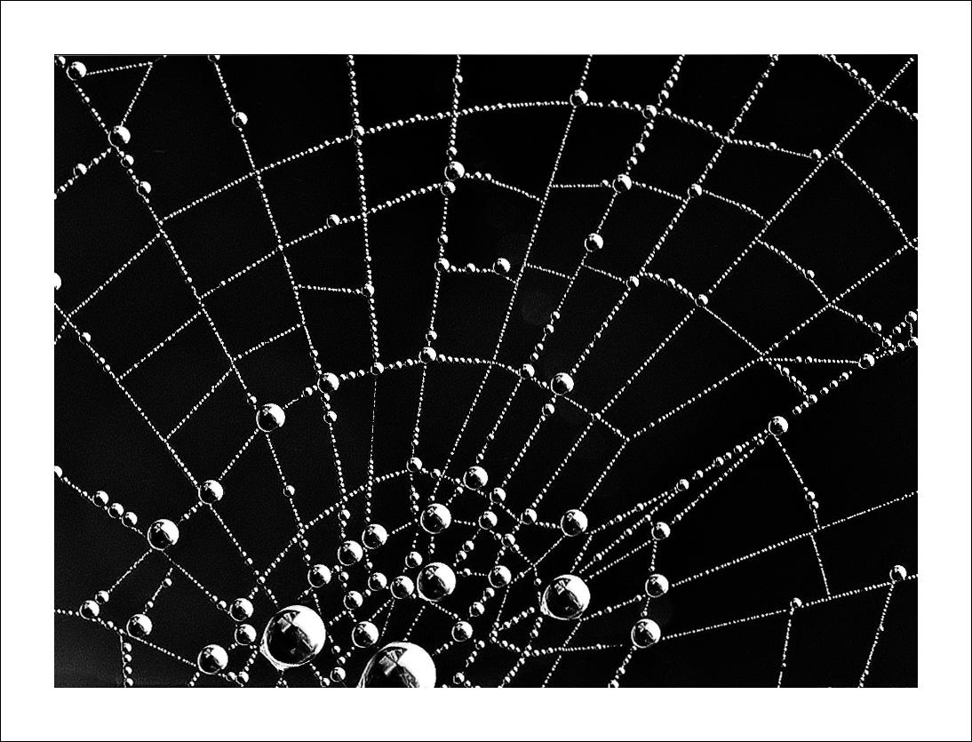 Spinnennetz..