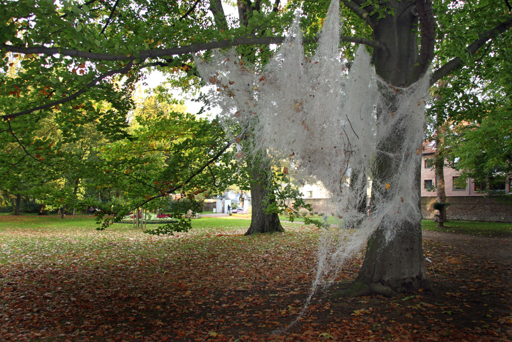 Spinnennetz?
