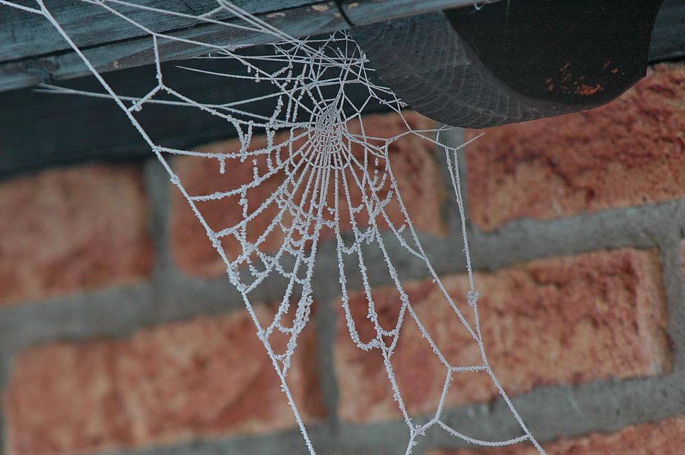 Spinnennetz...