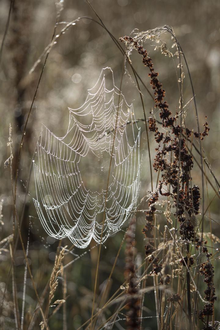Spinnennetz Altweibersommer 2016 _1
