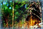 Spinnennetz an einem Frühlingsmorgen