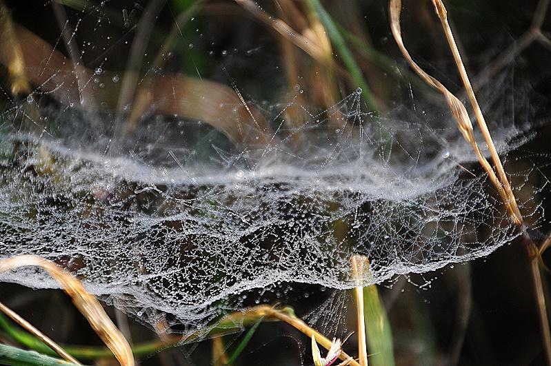 Spinnennetz benetzt