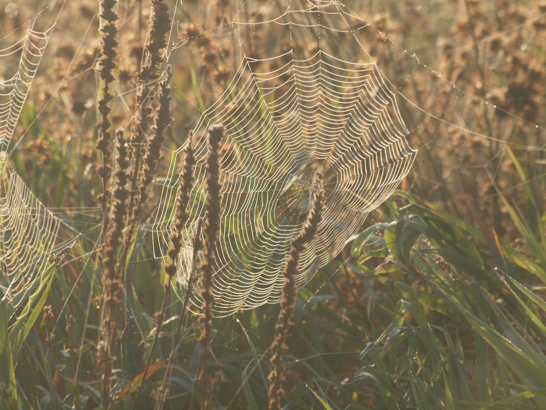 *Spinnennetz*