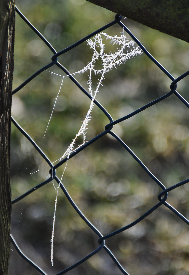 Spinnennetz-chen