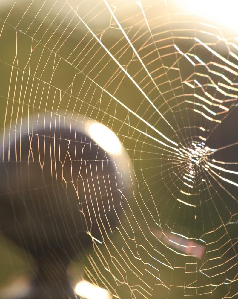 Spinnennetz....