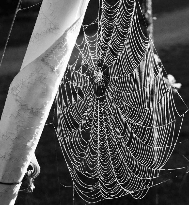 Spinnennetz einmal in S/W