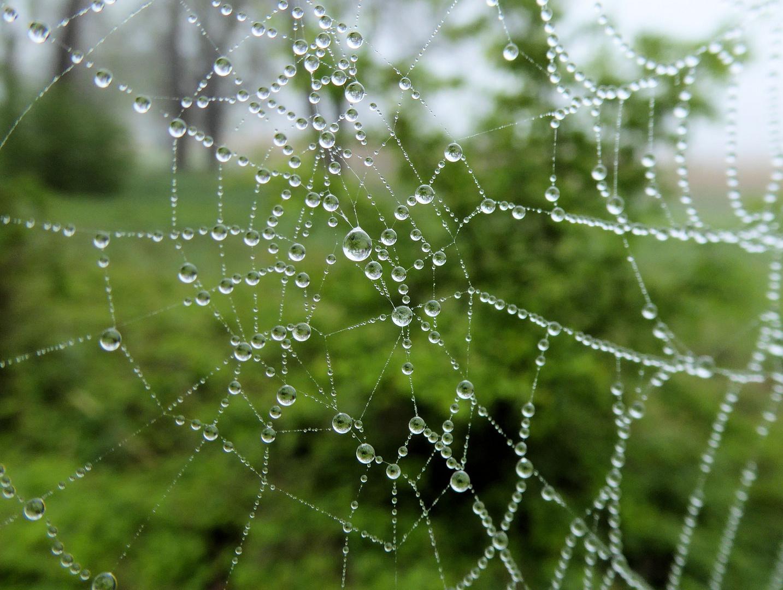 Spinnennetz fängt Nebel