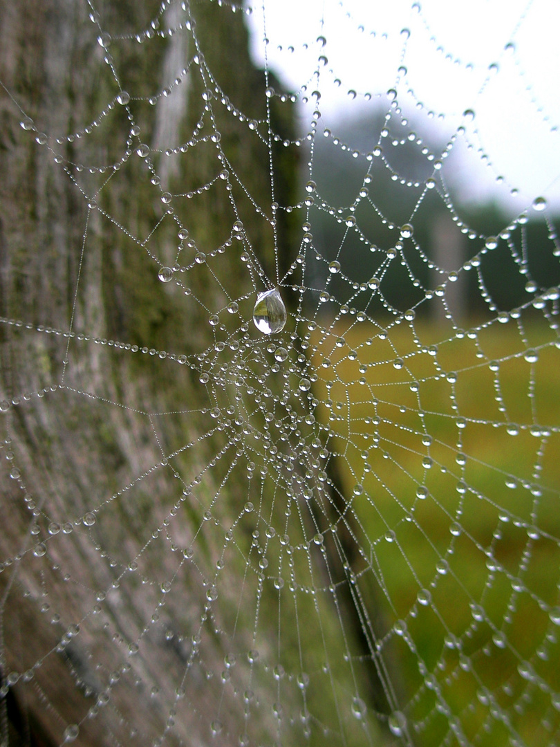 Spinnennetz II