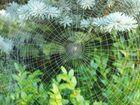 Spinnennetz im Frühtau