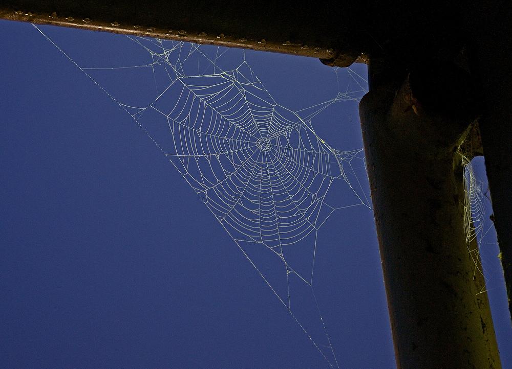 Spinnennetz im Morgengraun