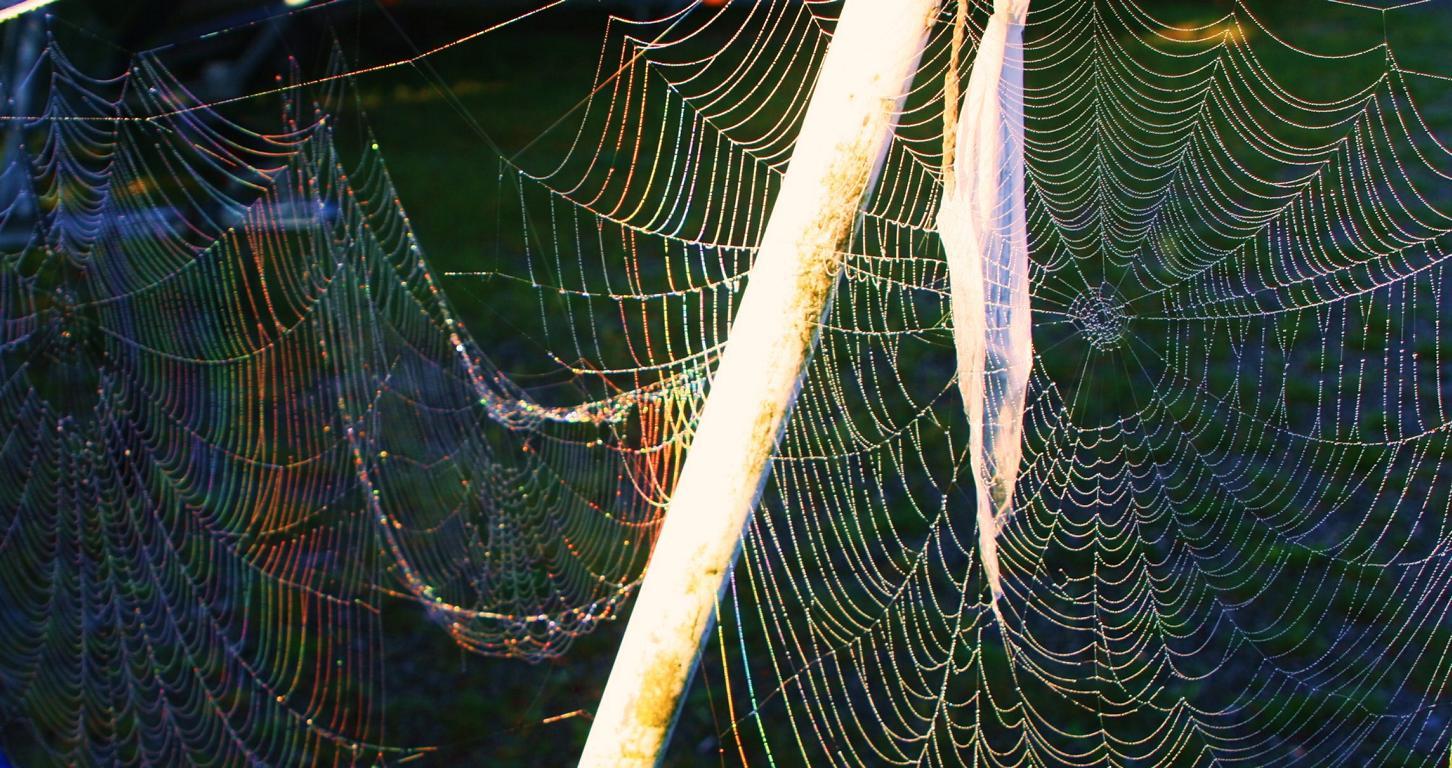 Spinnennetz im Morgenlicht