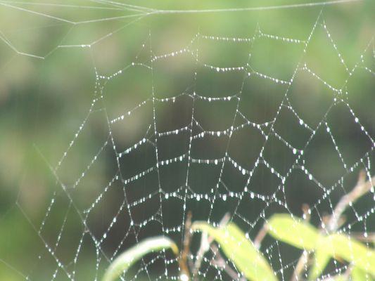 Spinnennetz im Regen.