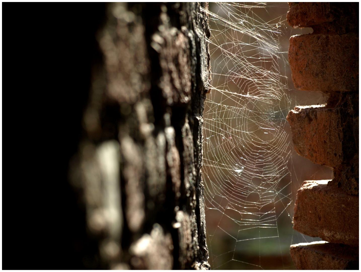 Spinnennetz in einer Schießscharte