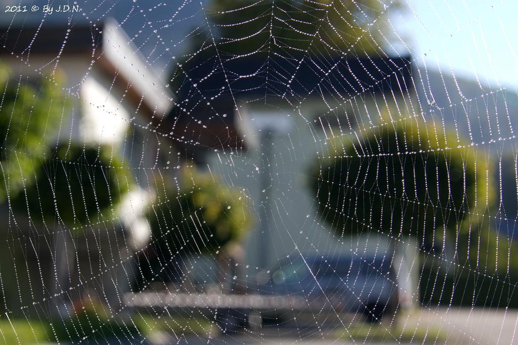 Spinnennetz mit Morgentau II