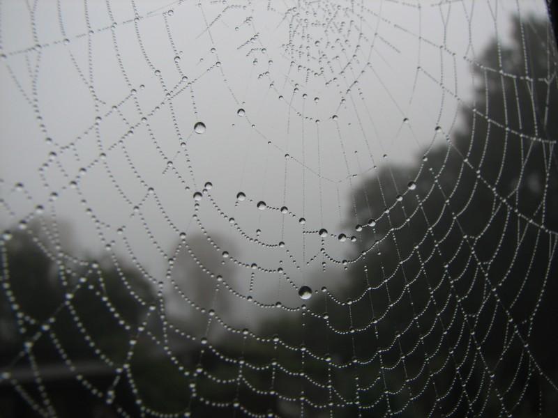 Spinnennetz mit Regentropfen