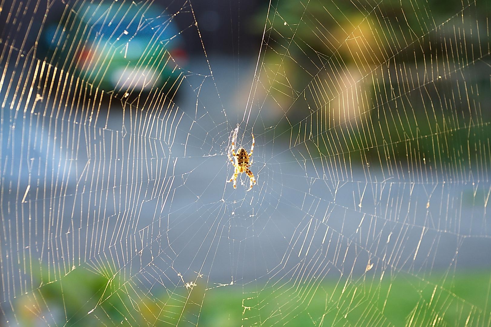 Spinnennetz mit Spinne