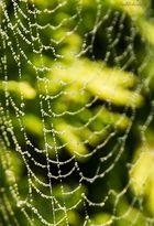* Spinnennetz mit Tropfen 2 *