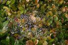 Spinnennetz mit Wassertropfen von Walter Drießen