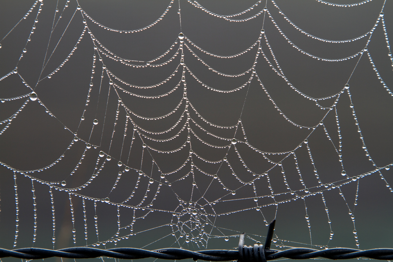 Spinnennetz - Nr. 5121