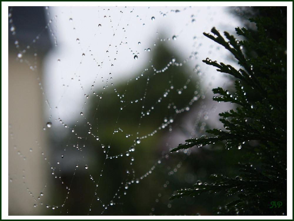 Spinnennetz-Perlenkette