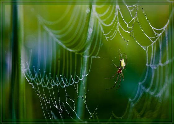 Spinnennetz / Spider's web