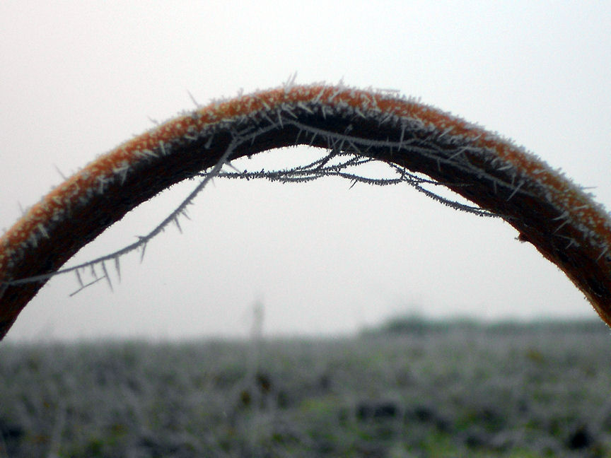 Spinnennetz tief gefroren