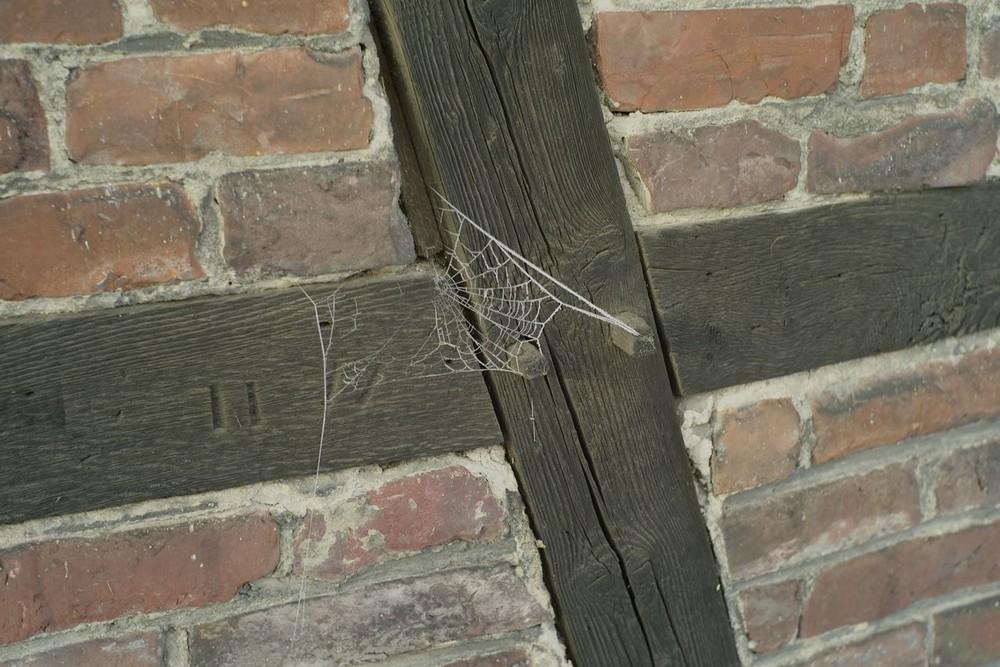 Spinnennetz und Fachwerk