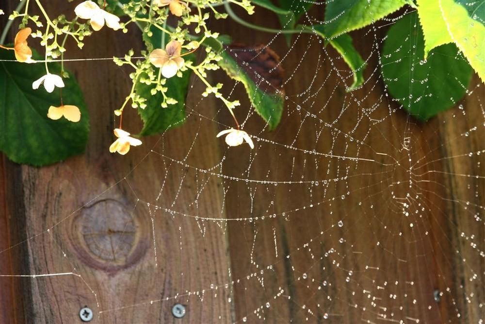 Spinnennetz vor meiner Haustüre