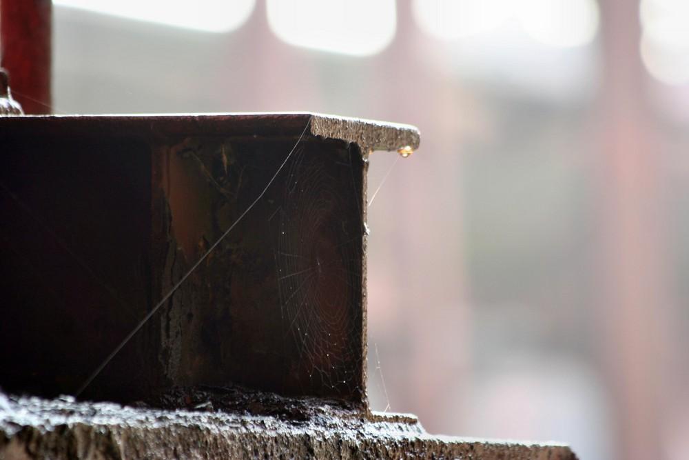 Spinnennetz , Wassertropfen , Stahl