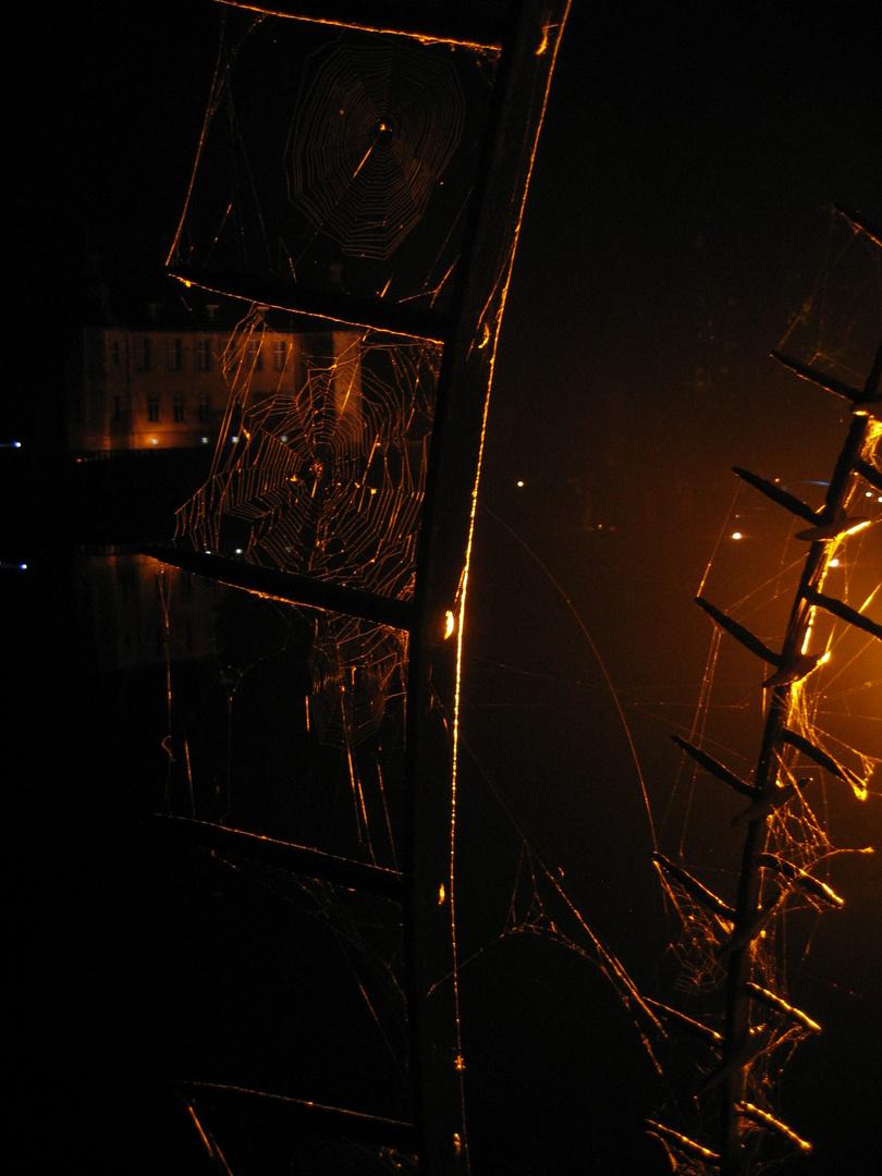 Spinnennetze bei Nacht