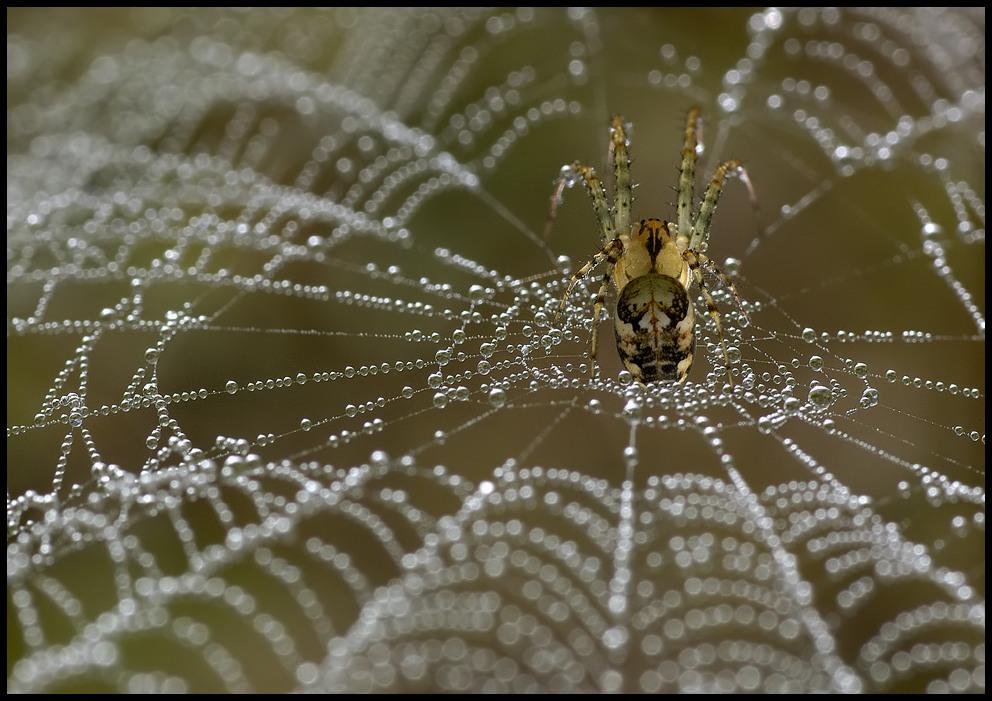 Spinnennetzperspektive (reload)