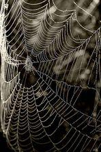 Spinnensegel
