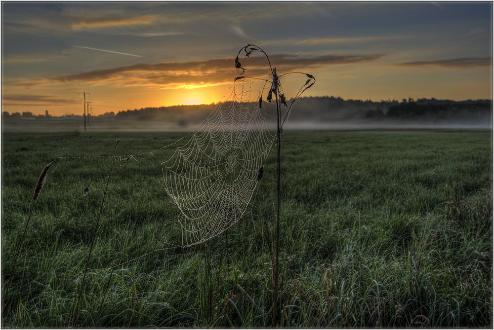 Spinnensommer 2
