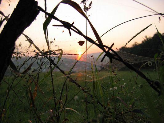 Spinnenweben im Schein des Sonnenaufgangs
