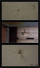 Spinnenwelt