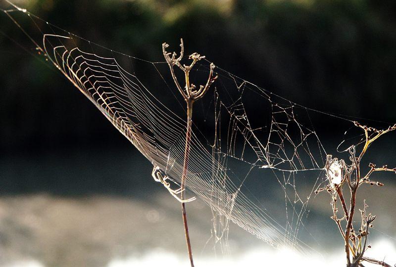 Spinnenwerk