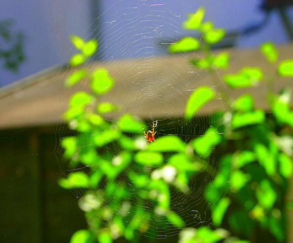 Spinnerei im Garten