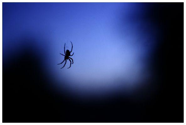 Spinnereien zur blauen Stunde