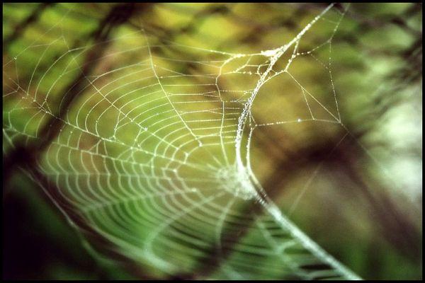 spinnernetz