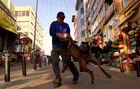Spinnin' dog