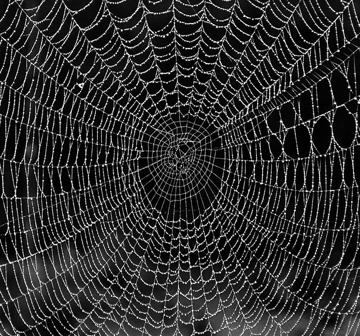 Spinnweb im Morgentau