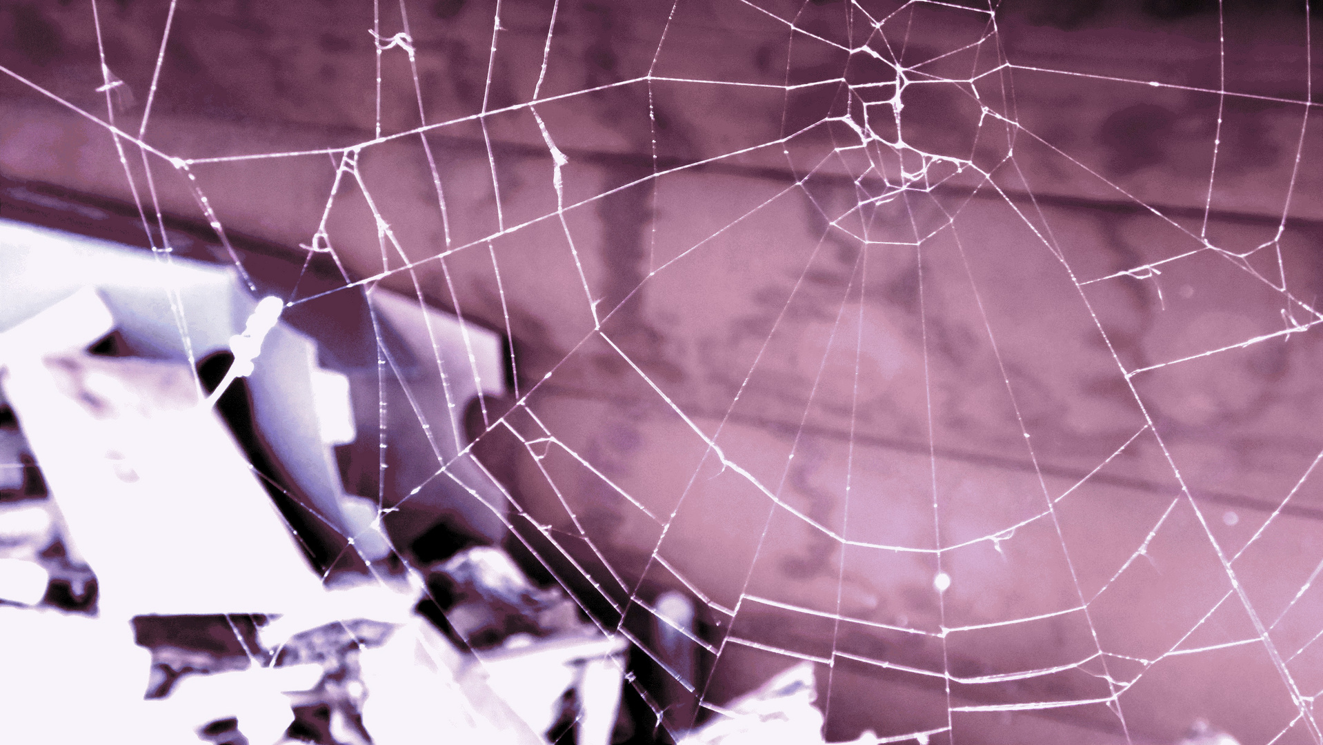 Spinnwebe