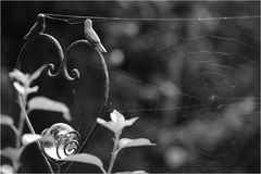 Spinnweben angesetzt