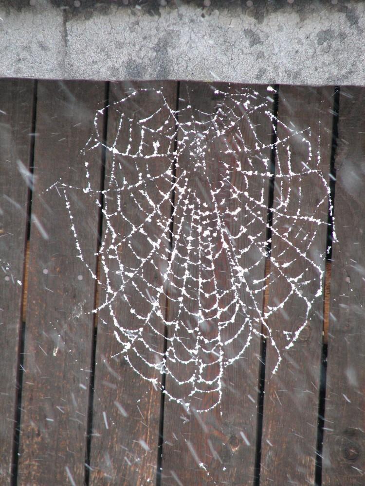 Spinnweben im Schnee