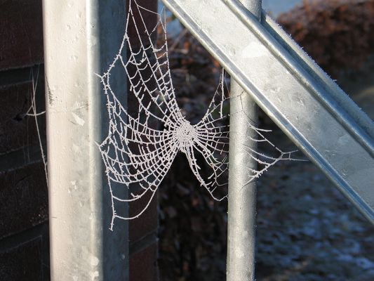 Spinnweben im Winter