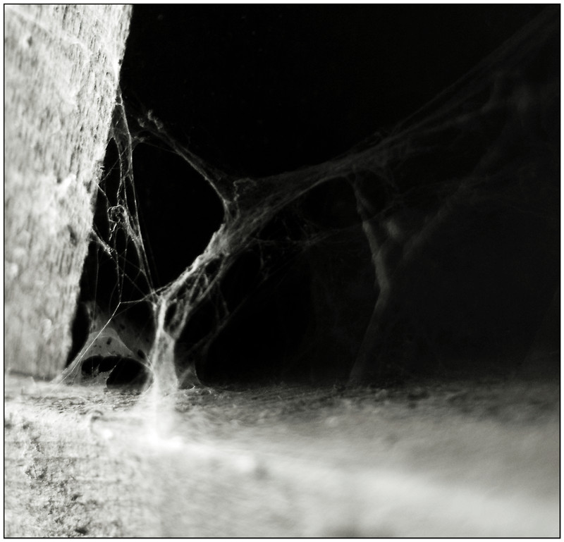 spinnwebentanz