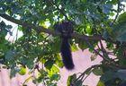 Spion im Baum
