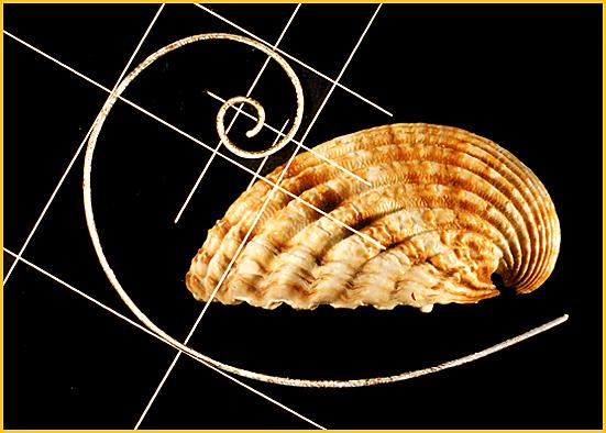 Spirale (suite Fibonacci)